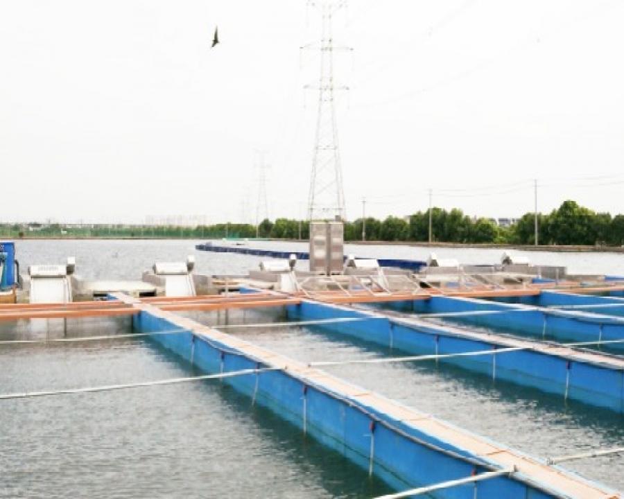 同里国家现代农业园生态池塘养殖基地